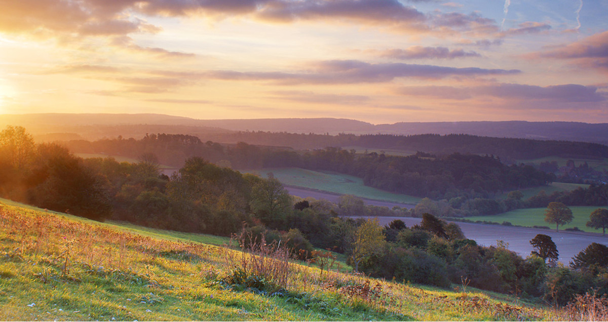 Surrey Hills, designated area of outstanding natural beauty.
